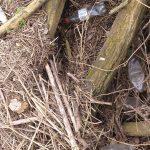 Disregarded Plastic in The River Trent, Staffordshire