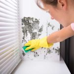 Act now to stop black mould problems