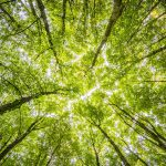 Plan to plant new forests to fight global warming welcomed