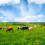 Harvest of good ideas to cut farm pollution