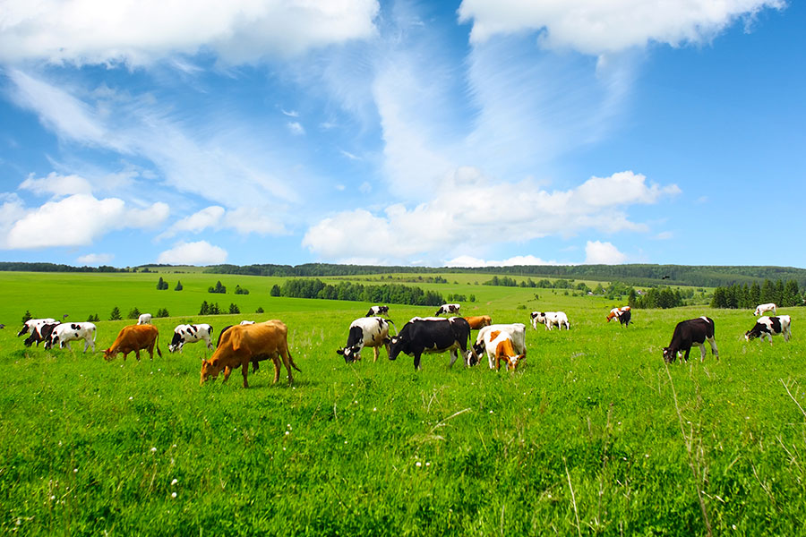 Farmers are hoping to reap the benefits of new technology to help cut their carbon footprint.