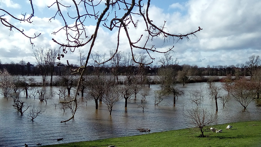 Flooded out – the River Severn in the background has overflowed saturating this field.
