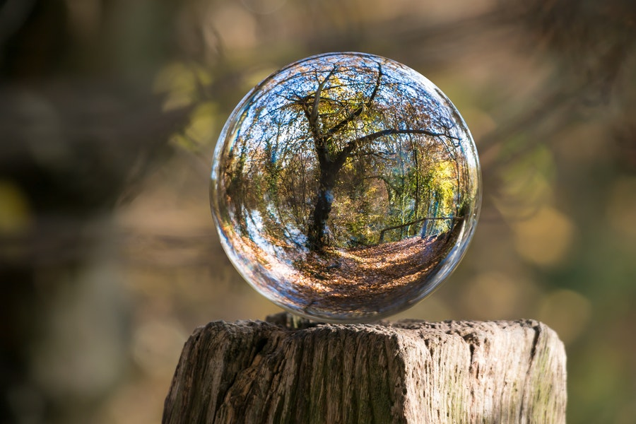 Crystal ball sitting on top of a log - through the ball you can see a tree - signifying the future.