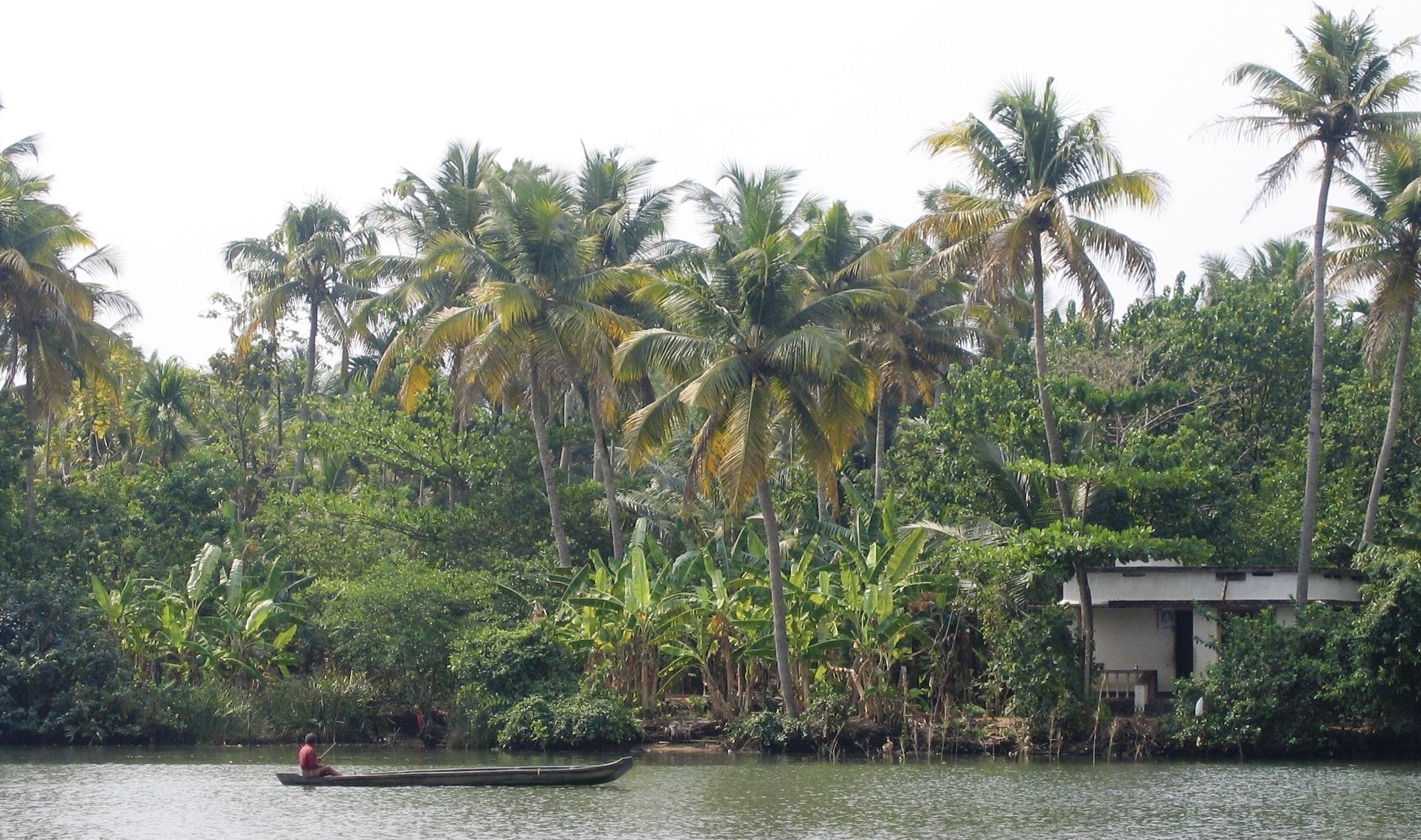 Vegetation - trees along a river